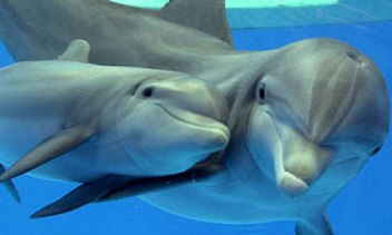 baby-dolphin-pictures-9